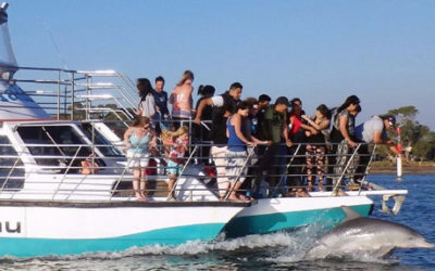 25% OFF – One Hour Dolphin & Scenic Canal Cruise